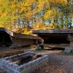 Gribskov i efterårsfarver